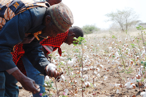 tanzania cotton farmer image